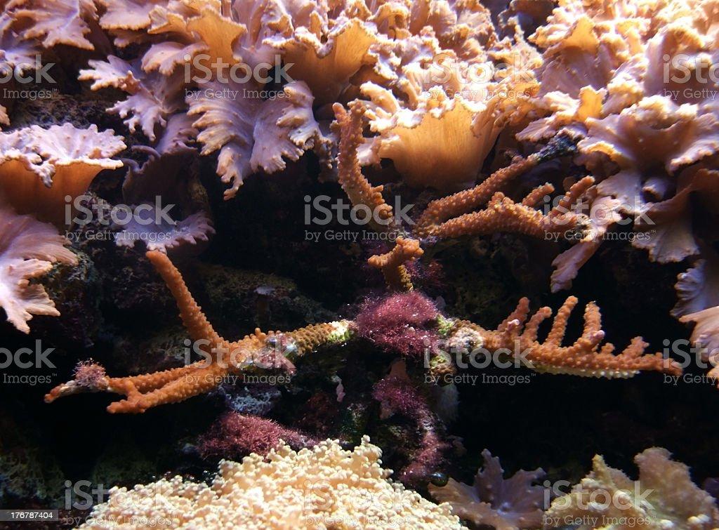 underwater scenery royalty-free stock photo