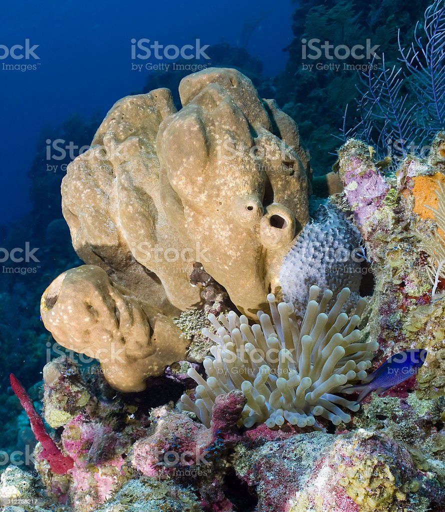 Underwater scenic stock photo