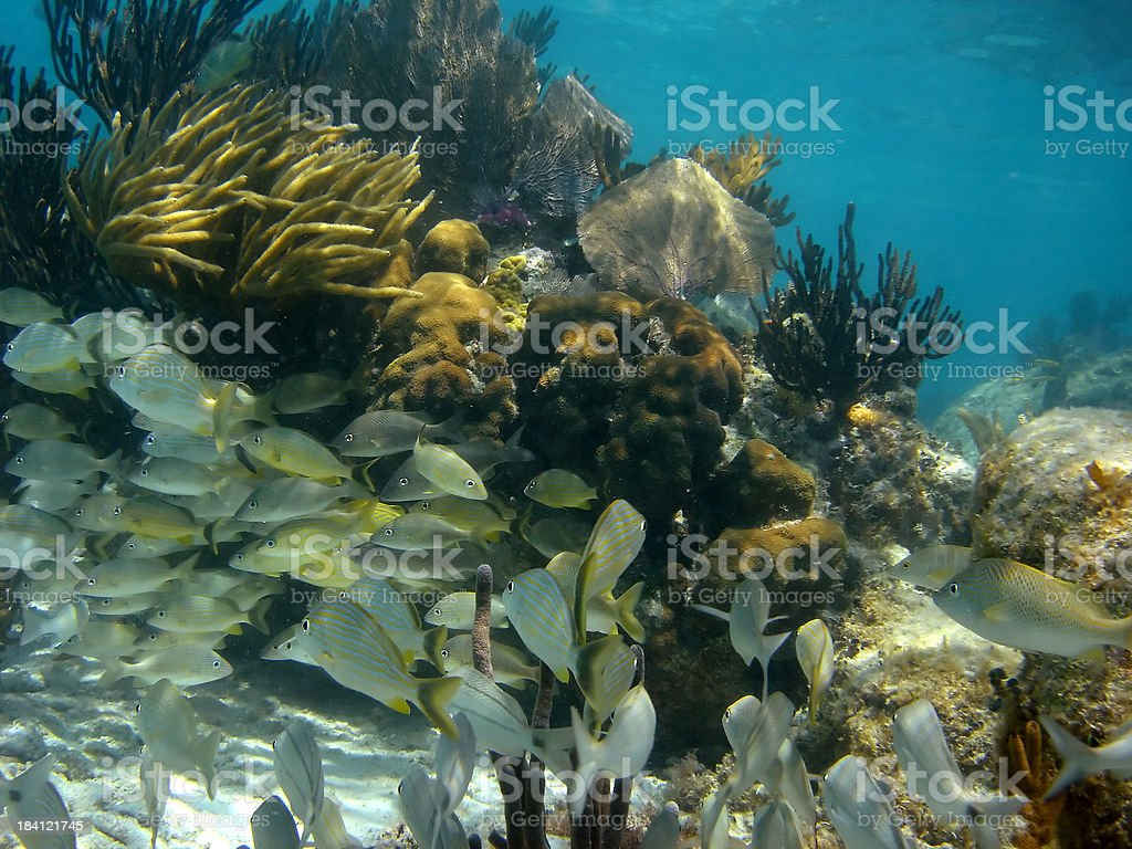 Underwater School of Fish royalty-free stock photo