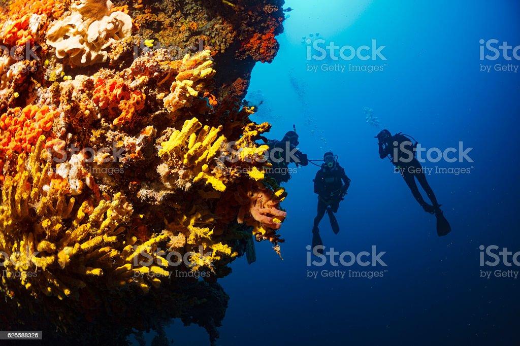Underwater  Scuba diver enjoy  Explore coral reef   Sea life   Sponge stock photo