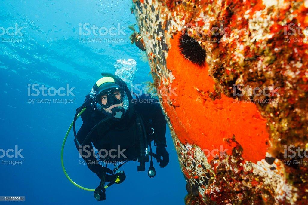 Underwater  Scuba diver enjoy   Sea life  Orange sponge  Sea urchin stock photo