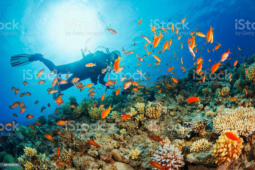 Underwater  Scuba diver explore and enjoy  Coral reef  Sea life stock photo