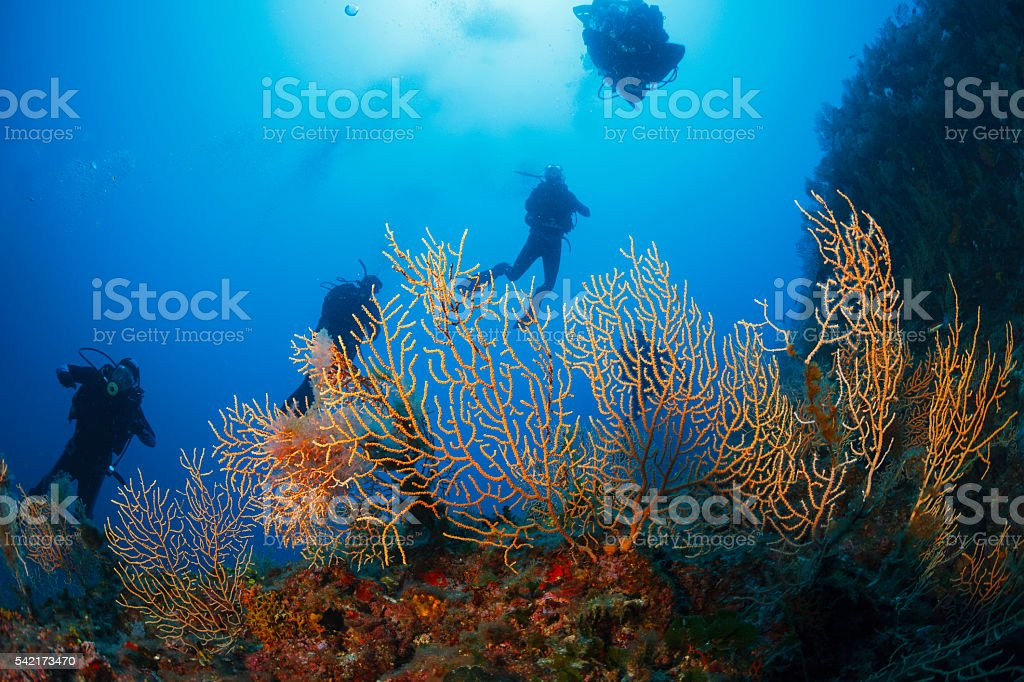 Underwater  Scuba divers enjoy  Explore coral reef   Sea life stock photo