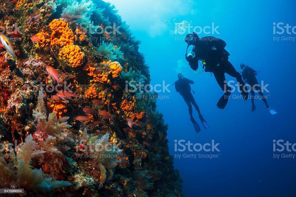 Underwater  Scuba divers enjoy  Explore  reef   Sea life  Sea sponge stock photo