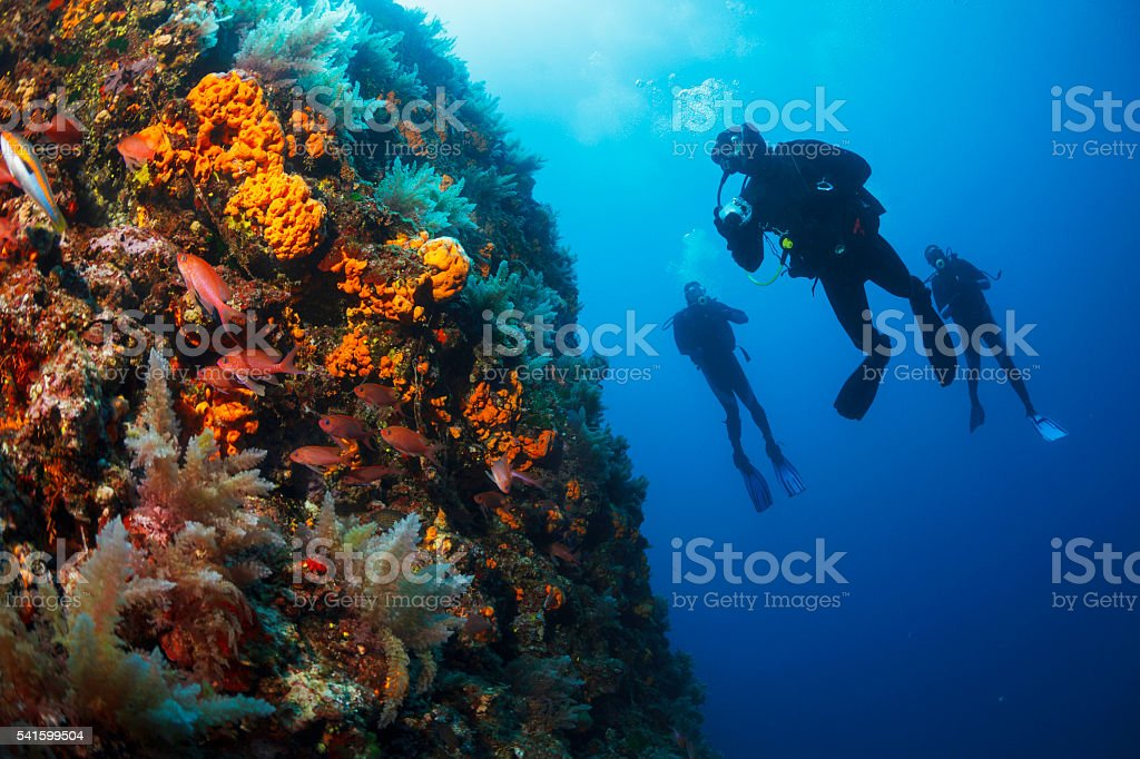 Underwater  Scuba divers enjoy  Explore  reef   Sea life  Sea sponge stock photo