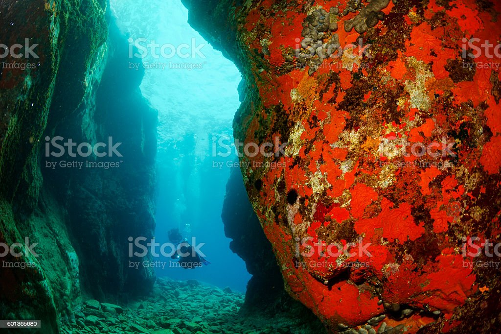 Underwater  Scuba divers   Explore coral reef   Sea life orange sponge stock photo