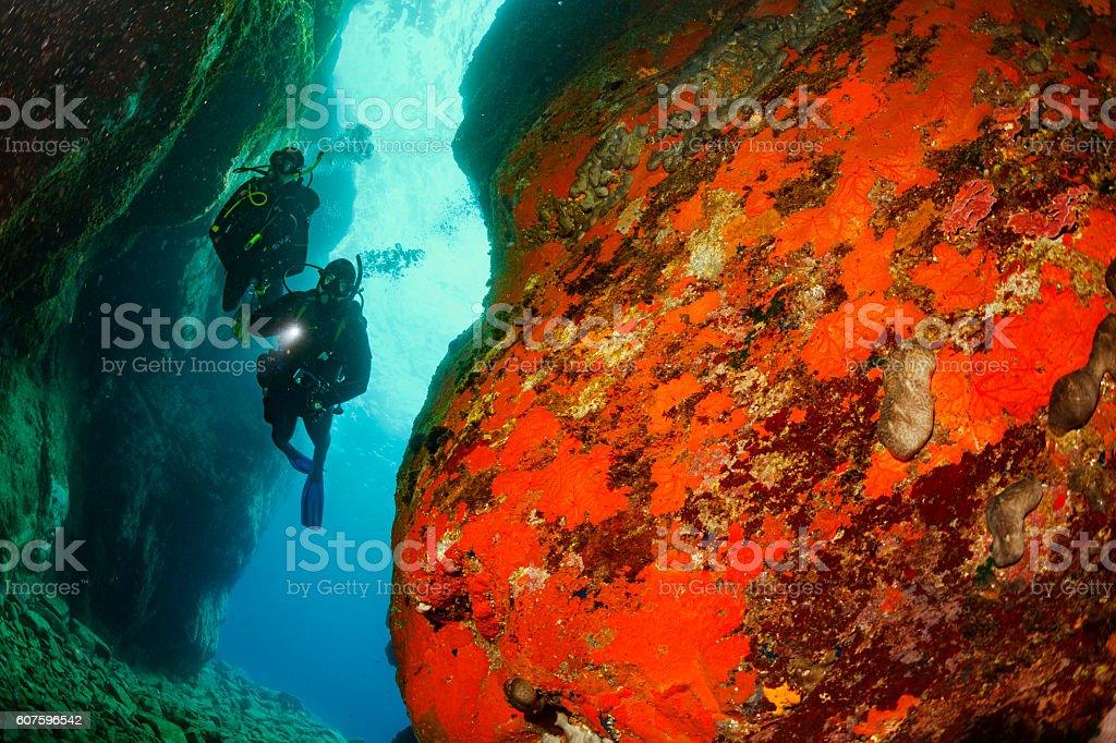 Underwater  Scuba divers   Explore coral reef   Sea life orange sponge stock photo