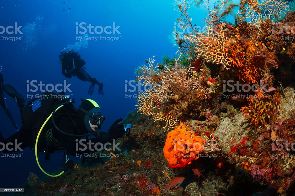 Underwater  Scuba divers photographing  Explore coral reef   Sea life stock photo