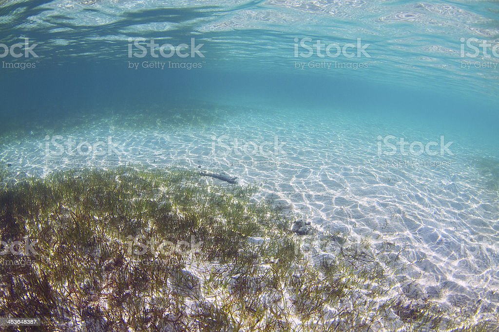 Underwater Sea Grass stock photo