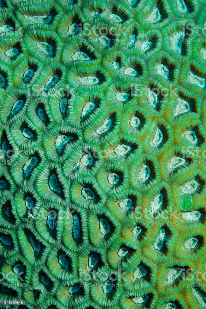 Underwater  Sea life   Mosaic coral    Scuba Diver Point of View stock photo