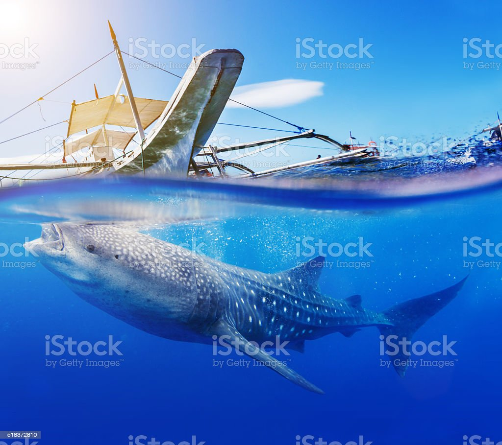 Underwater shoot of a whale shark stock photo