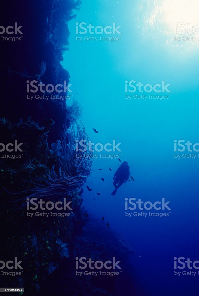Underwater shot of a coral reef ecosystem royalty-free stock photo
