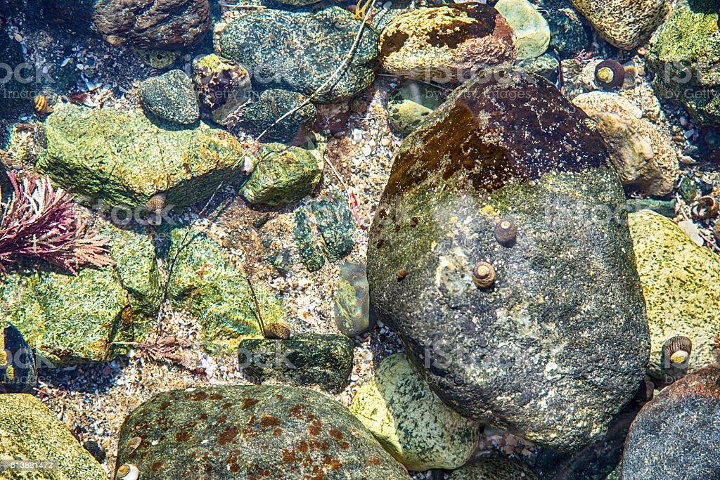Underwater Tide Pool Background stock photo
