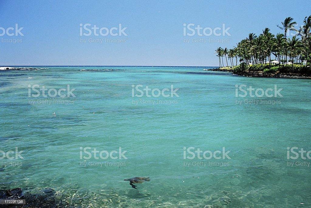 Underwater turtle in Maui Hawaii resort hotel turquoise bay stock photo