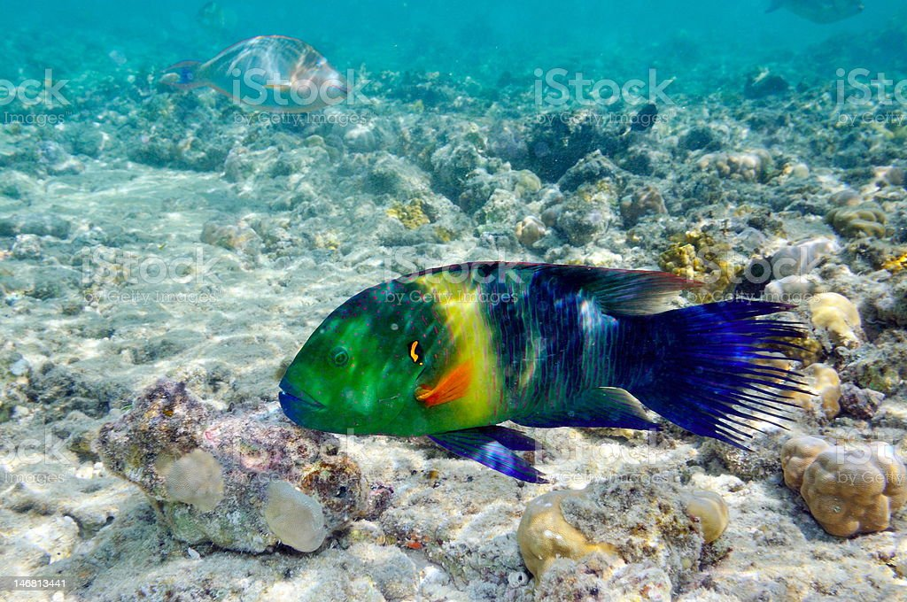 underwater view of tropical fishes stock photo