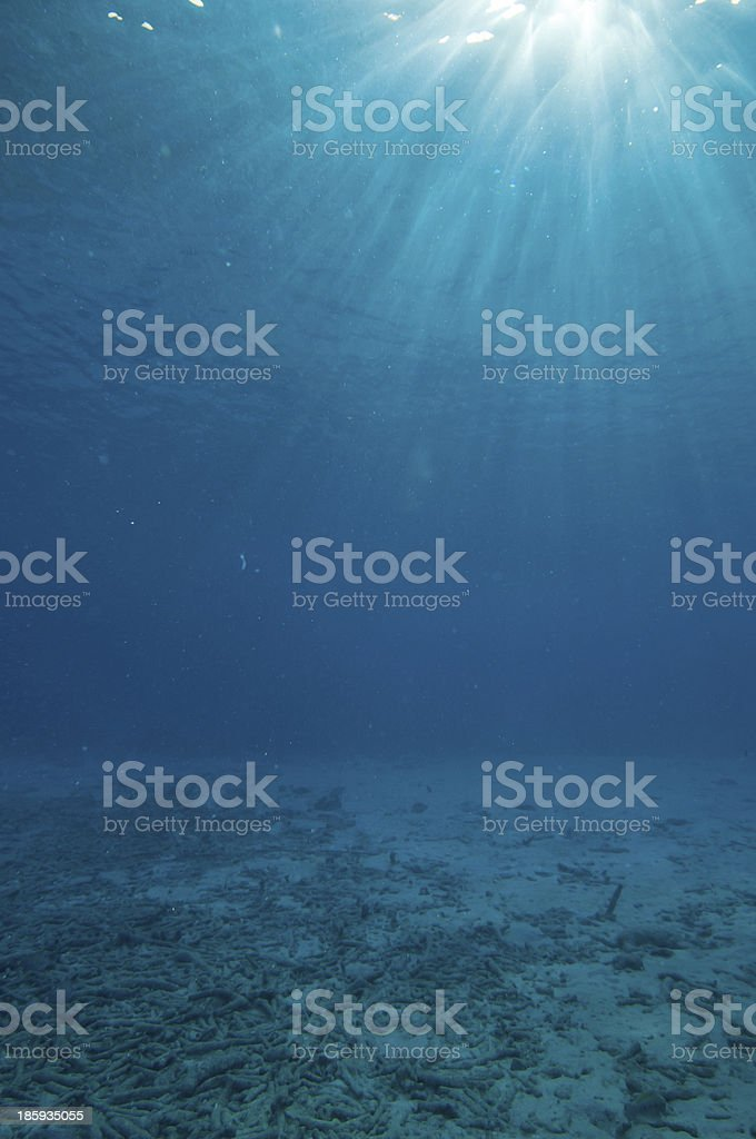 Underwater vision stock photo