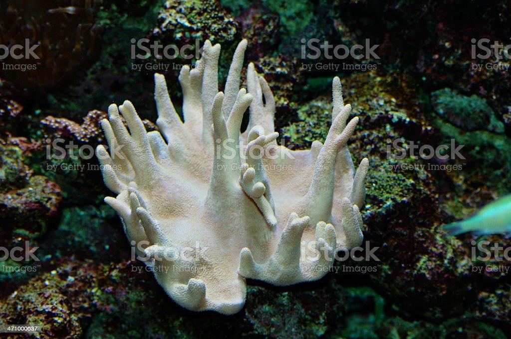 underwater white coral stock photo