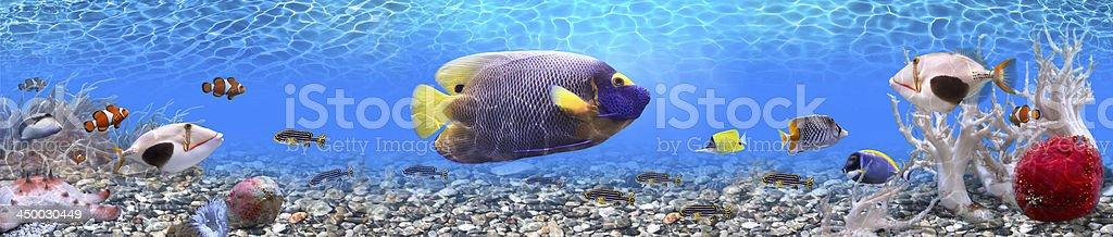 Underwater world - panorama stock photo
