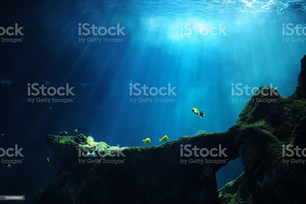 Underwater World - XLarge stock photo