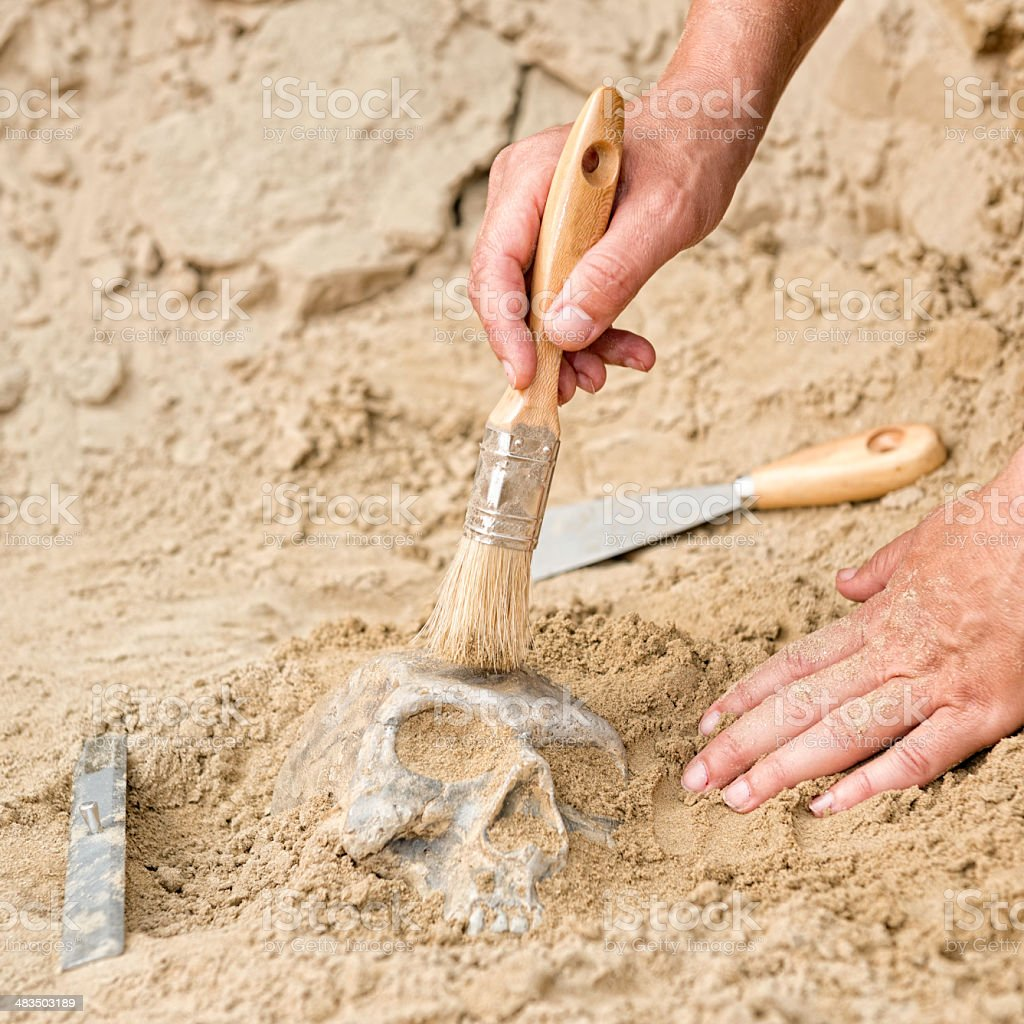 Unearthing human skull at archaeological site stock photo