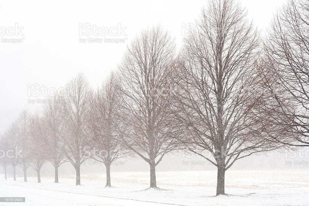 Unending Winter royalty-free stock photo