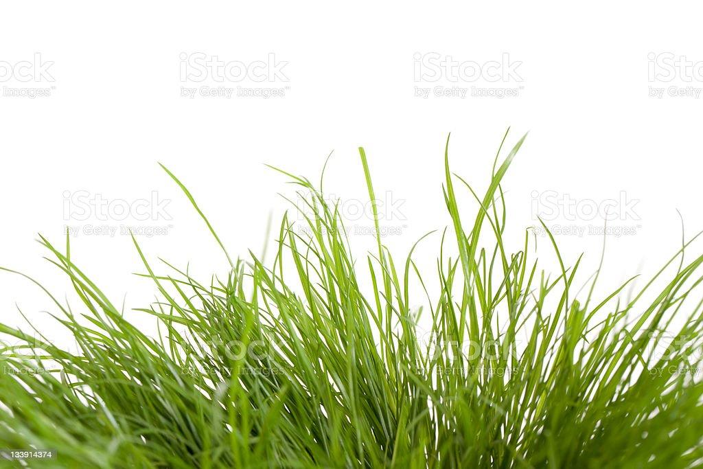 Uneven Grass (XXXL) royalty-free stock photo