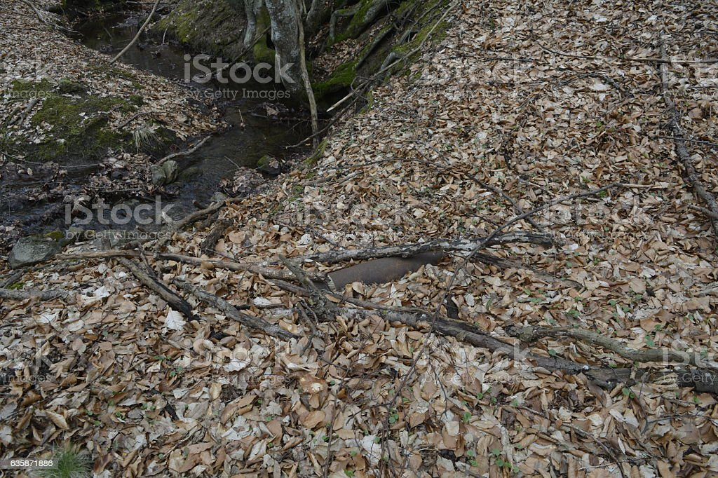 unexploded bomb, forest stock photo