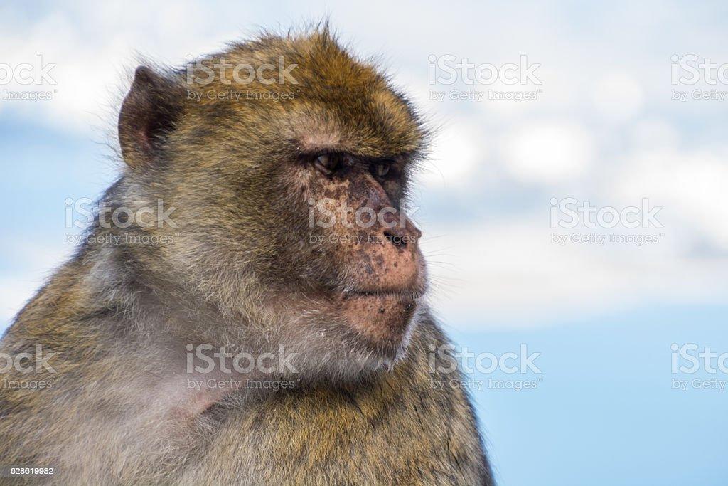 unhappy monkey stock photo