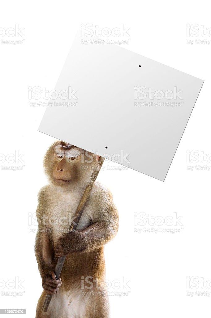 Unhappy monkey working royalty-free stock photo