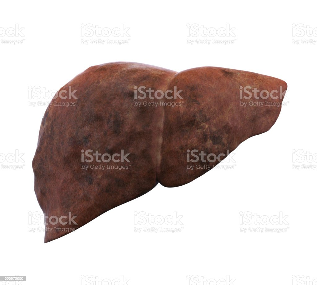 Unhealthy Liver Anatomy Isolated stock photo