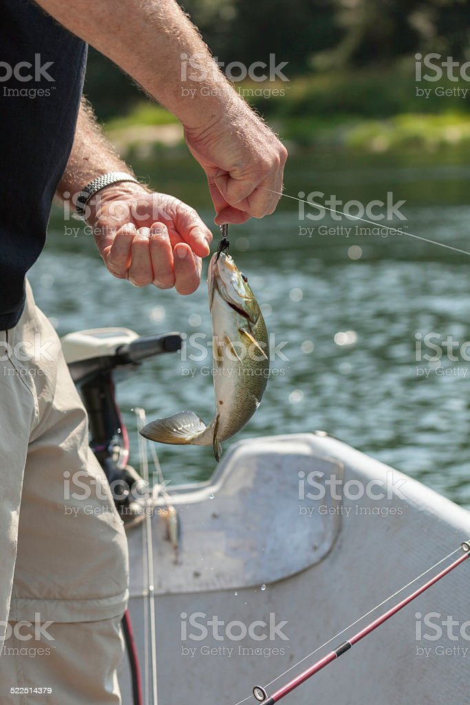 Unhooking a Fish stock photo
