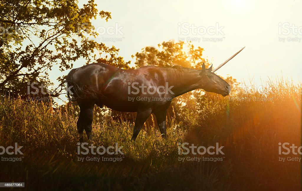 Unicorn in Forest stock photo
