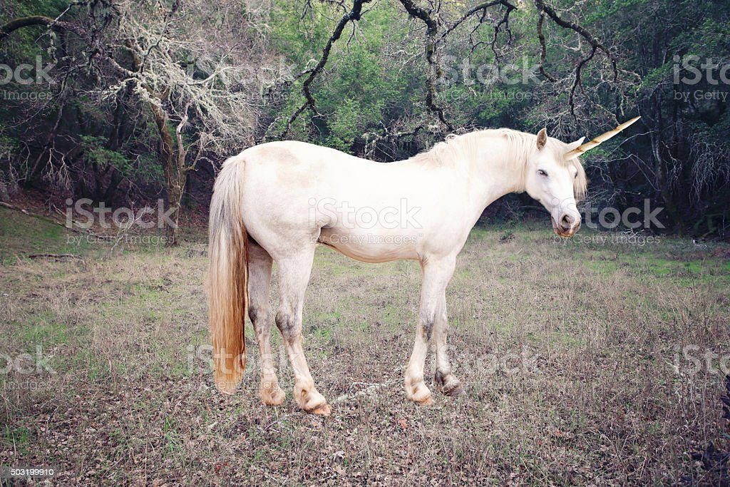 Unicorn photo realistic stock photo