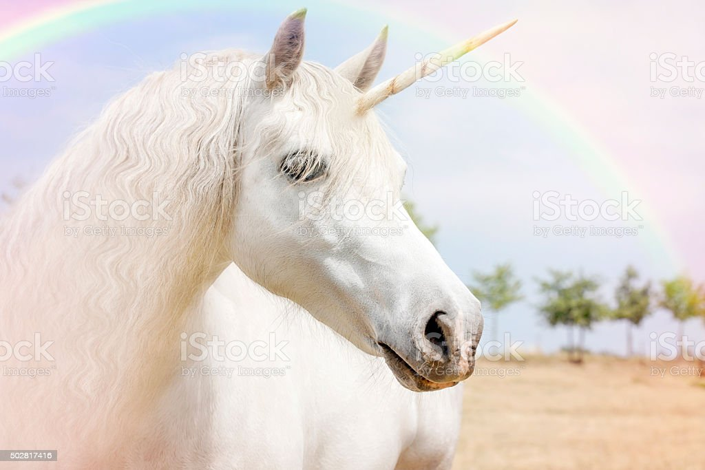 Unicorn stock photo
