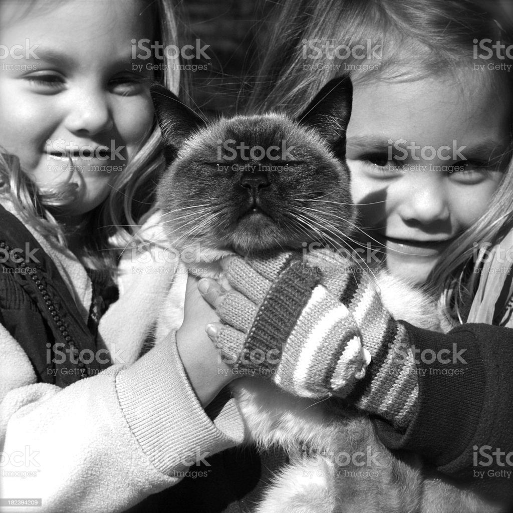 Unimpressed Cat royalty-free stock photo