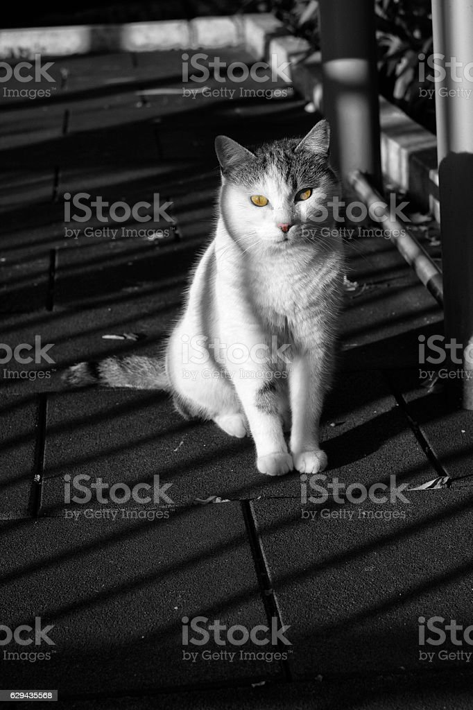 Unique Artistic Cat Photo with Shadows On It stock photo