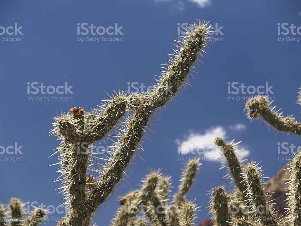 Unique desert catcus stock photo