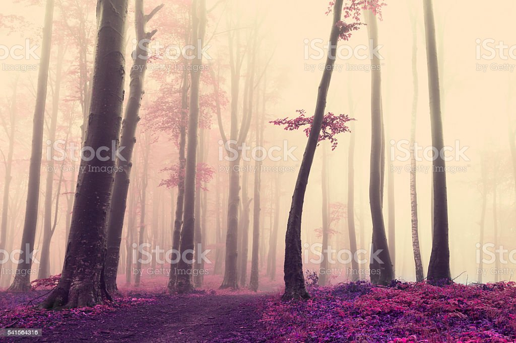 Unique tree in misty forest stock photo