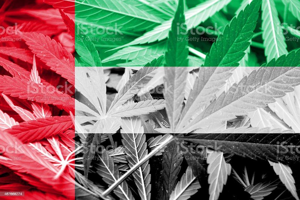 United Arab Emirates Flag on cannabis background. Drug policy. stock photo