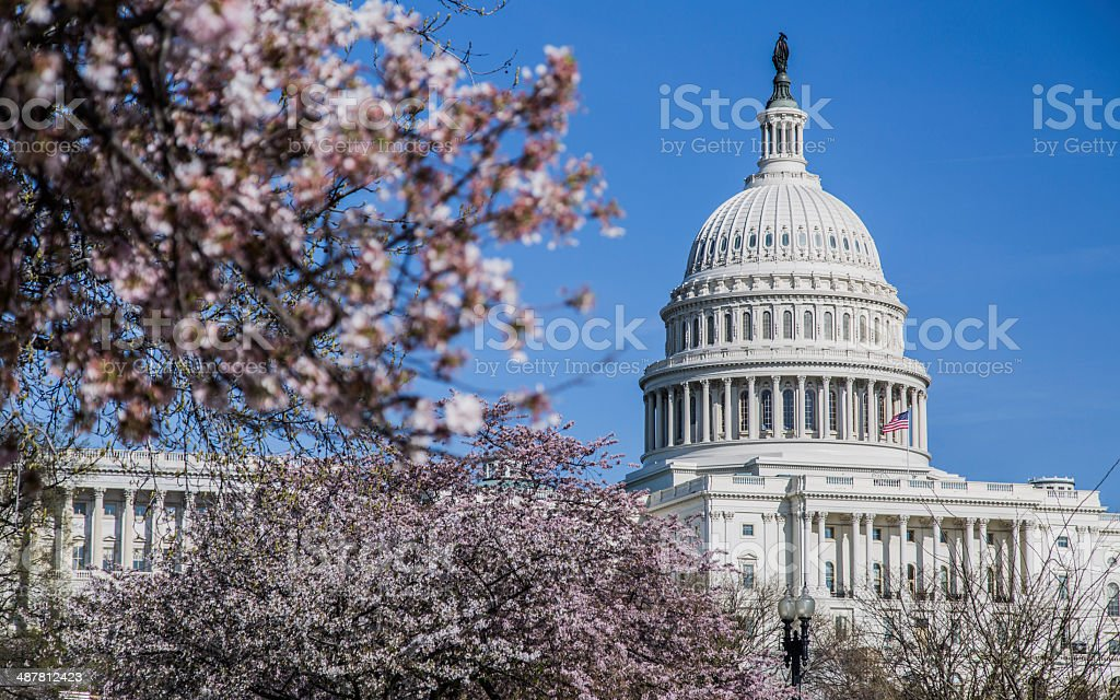 United States Capitol Building And Cherry Blossoms stock photo