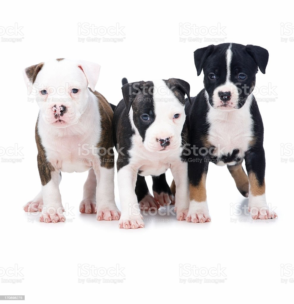 United we stand - Puppies showing unity royalty-free stock photo
