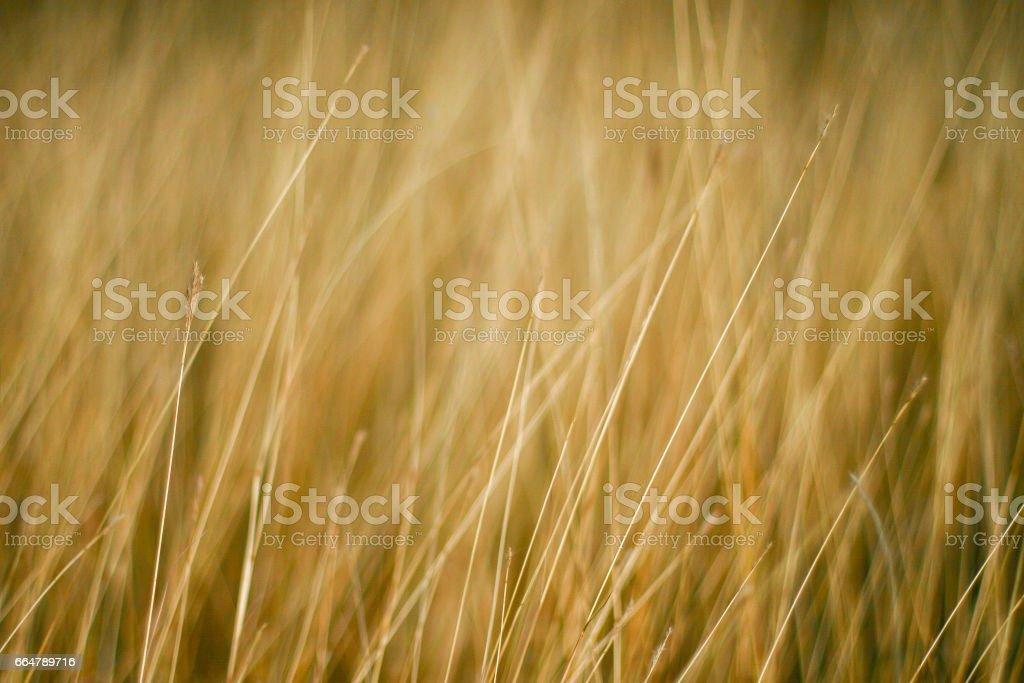 Universal line of nature stock photo