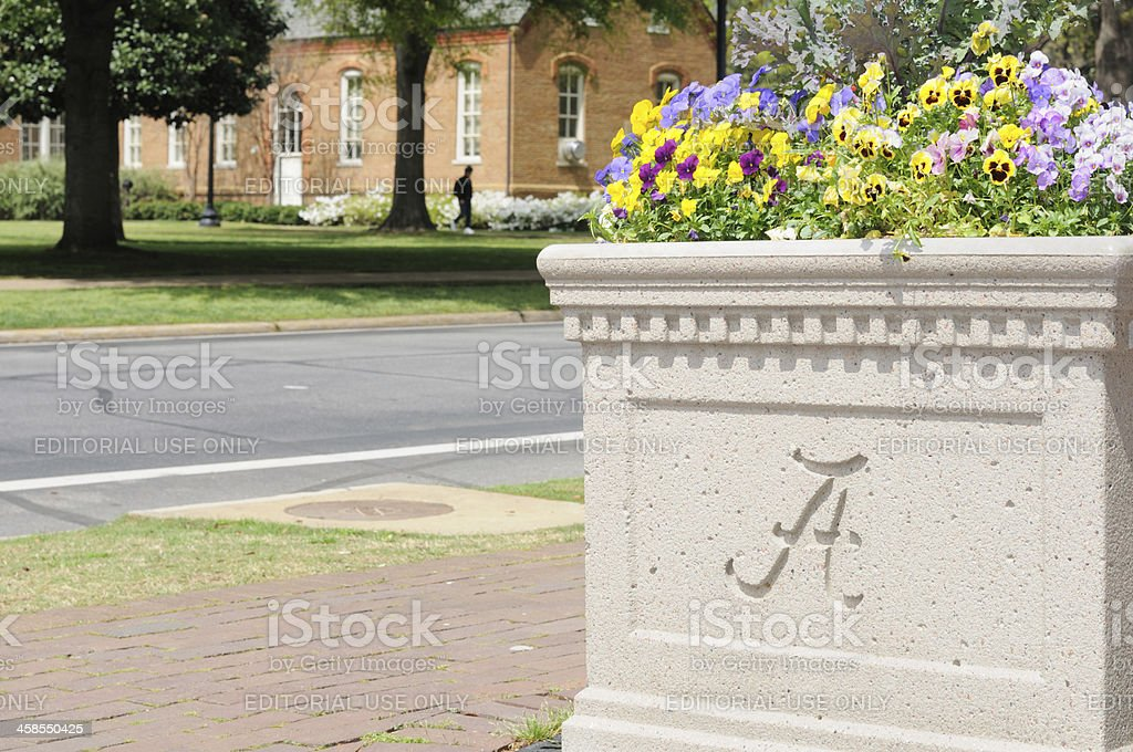 University flower planter stock photo