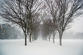 University of Rhode Island winter trees