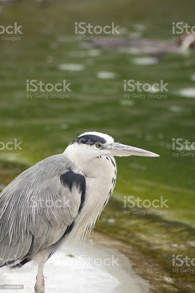 Unknown Bird stock photo