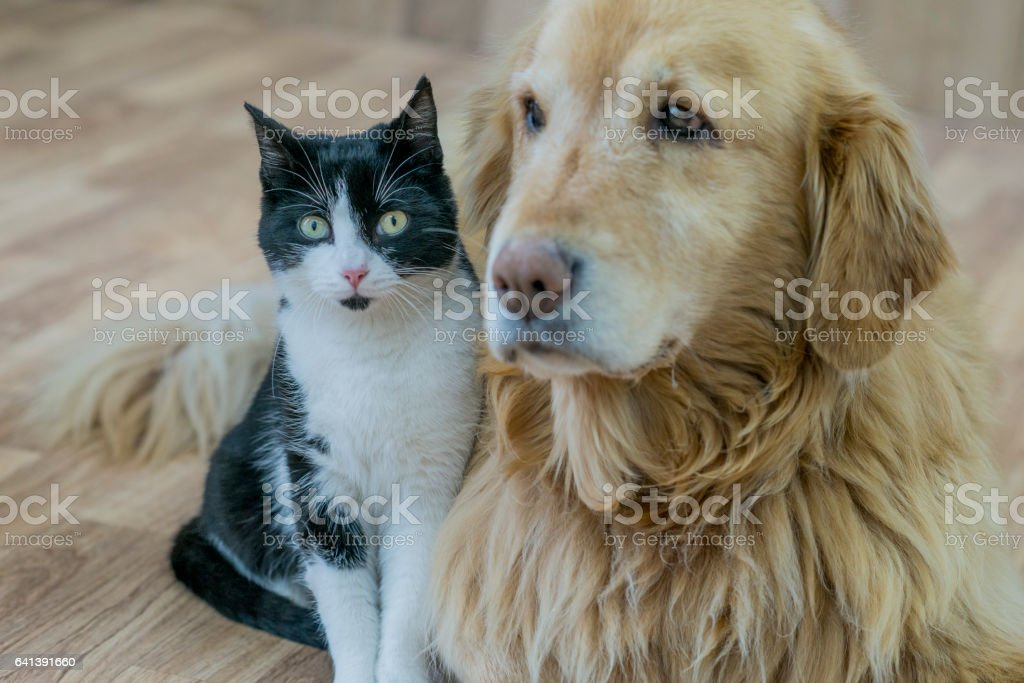 Unlikely Friends stock photo