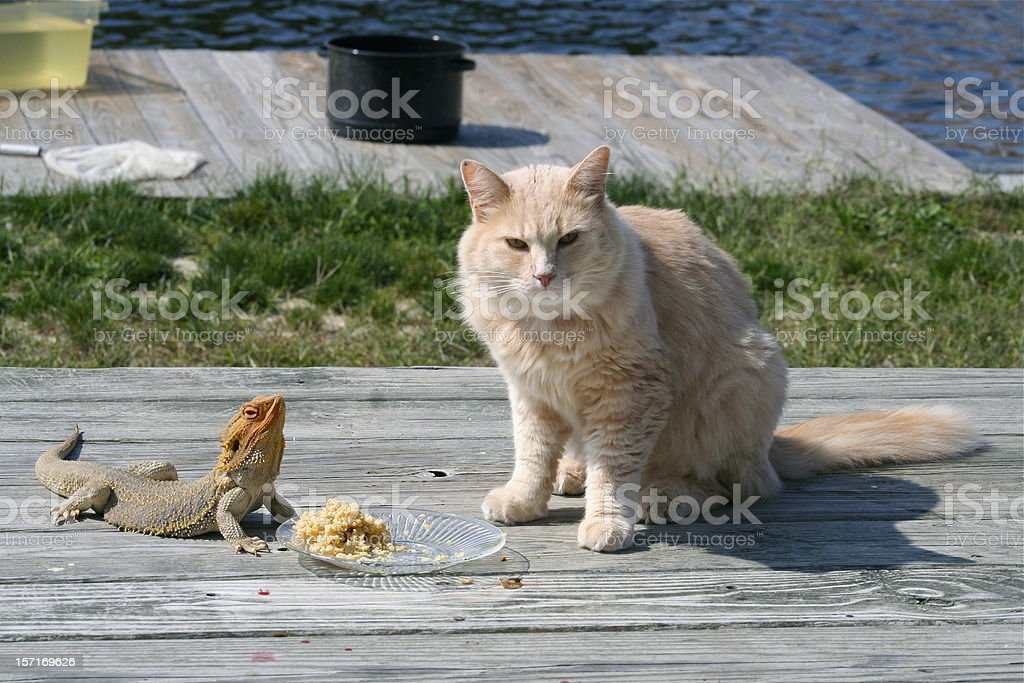 Unlikely Pets stock photo