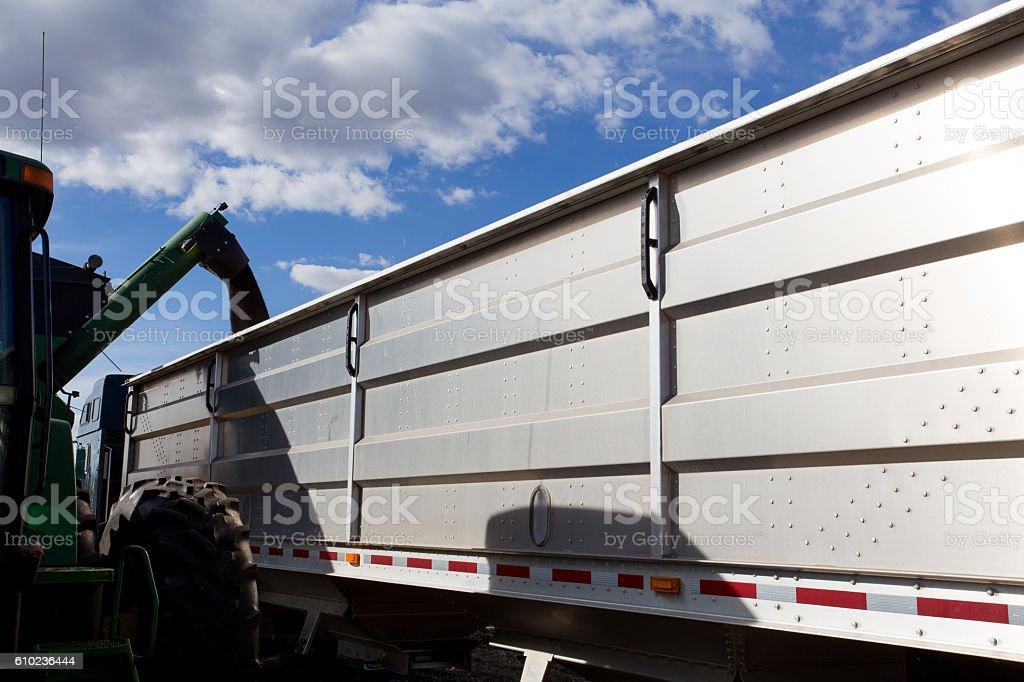 Unloading canola into truck trailer stock photo