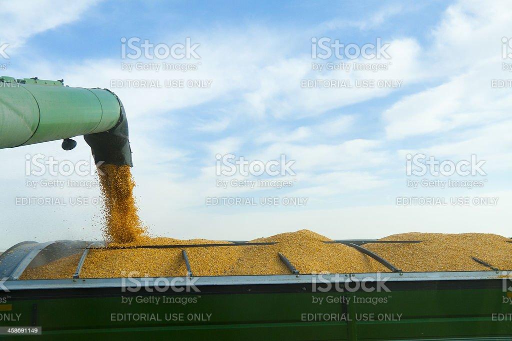 Unloading Corn into a Grain Hopper stock photo