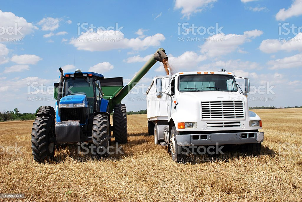 Unloading of Wheat royalty-free stock photo